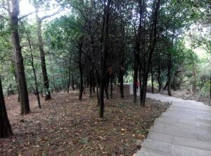 树木园登山径的小道