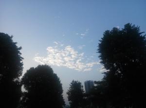 树木园上的天空